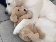 Dog Sleeping With A Stuffed Dog