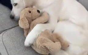 Dog Sleeping With A Stuffed Dog