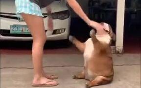 Fat Dog Loves A Good Rub