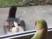 Parrot Trolling A Cat