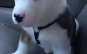 Cute Little Furball Annoyed By Hiccups