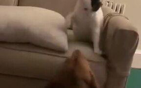 Doggo Loves To Be Bullied By Cat
