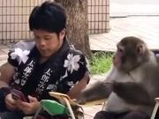 Monkey Sharing Secrets With A Human