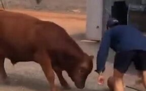 Man Playing Basketball With A Cow
