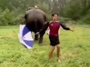 Elephant Dancing With A Human