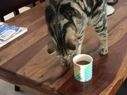Cat Smelling Coffee And Scratching The Table