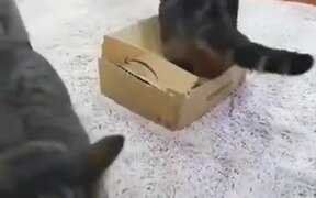 Mean Fat Cat On A Box
