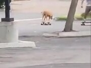 Man Riding A Skateboard With Dog