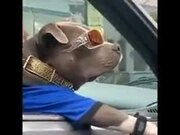 Coolest Dog On This Earth