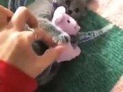 A Possessive Kitten