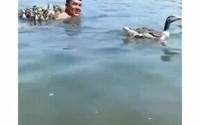 Ducklings Following A Man In Water