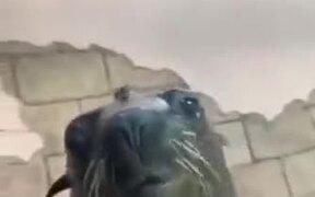 Seal Copying Freaky Human Smile