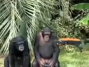Chimps Operating A Drone