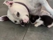 Dog Being Gentle With A Kitten