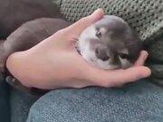 Otter Longing For A Hug