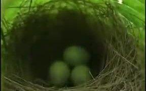 Tiny Bird Nest With Eggs