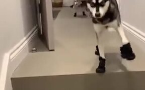 Dogs With Special Running Shoes