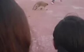 Boy Chased By A Raccoon In Daylight