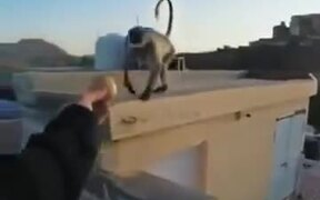 Worst Way To Make A Monkey Angry