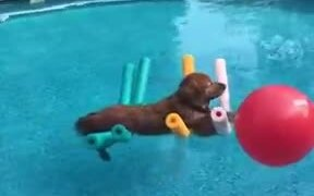 Dog Floating On The Water Without Movement