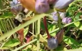 A Bee De-Flowering