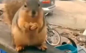 Squirrel Rapping Fast