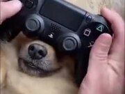 How To Play With Your Dog And PlayStation