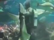 Crazy Diver Dancing With The Shark