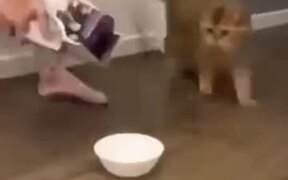 Cat Scared By Extra Food