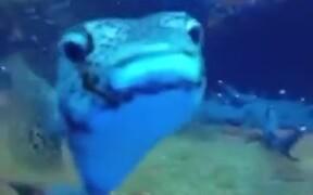 A Reason To Scuba Dive