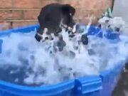 The Way This Dog Enjoys A Bath!