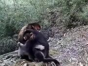 Monkeys Hugging And Expressing Emotion