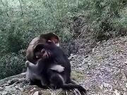 Monkeys Hugging And Expressing Emotion