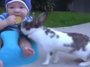 Rabbit Stole A Biscuit From A Baby