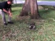 When A Raccoon Acts Like A Dog