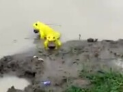 Have You Seen Yellow Frogs?