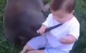 When The Baby Wants To Eat A Dog's Tail