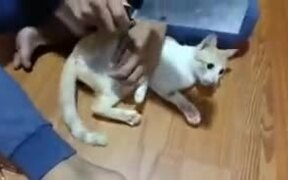 How To Control A Kitten