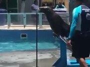 A Singing Seal