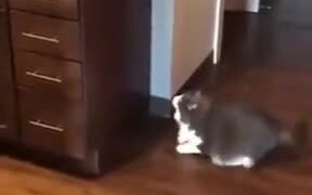 Fat Cat Unable To Jump