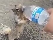 Thirsty Squirrel Asking A Human For Water