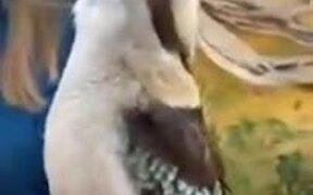 A Bird That Chirps Like A Monkey