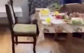 Piggie Destroying Dinner Table