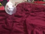 Cutest Kitten Playing On The Bed