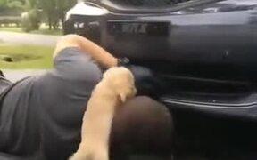 Puppy Helping Daddy To Fix A Car