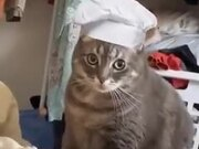 If A Cat Worked In A Bread Shop