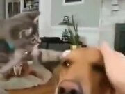 Kitten Patting Doggo
