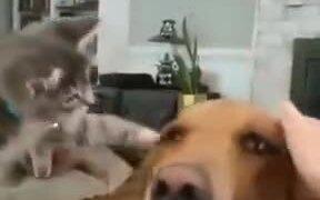 Kitten Patting Doggo