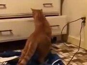 Cat Discovering Hidden Goat