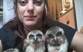 Three Owls And A Weird Lady